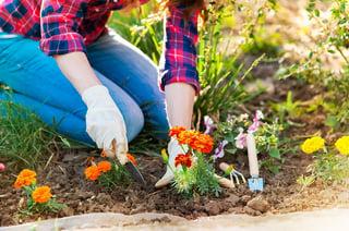 bigstock-Close-up-of-woman-hands-garden-99941102.jpg